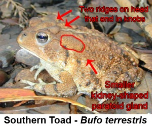 Don't Hurt This Toad!